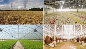 Tarımsal İşletmelerde elektrik indiriminden yararlanacaklar belirlendi İşte o işletmeler