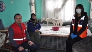 Getirilen gıda kolisini almak istemedi kuzularına yem istedi