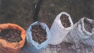 Son Dakika…….Afyonkarahisar'da salyangoz toplayanlara büyük ceza