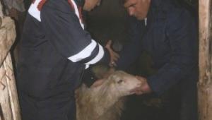 Son Dakika…..Koyun hırsızlarına suçüstü 2 kişi gözaltında