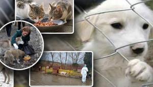 Bakanlık Sokak Hayvanları İçin Harekete Geçti