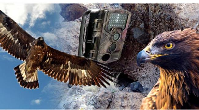Kaya Kartalı Ailesine Kameralı Takip