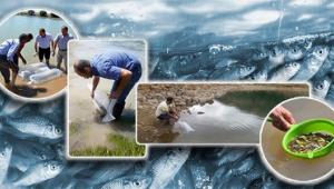 63 İlde Su Kaynaklarına 5 Milyon Sazan Balığı Bırakılacak