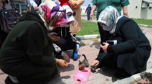 AK Kadınlardan barınakta yaşayan sokak hayvanları için mama desteği
