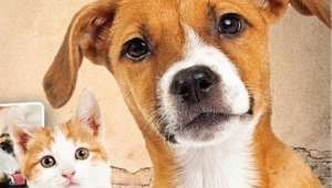 Sokak Hayvanları İçin 14 Milyon Lira Ödenek
